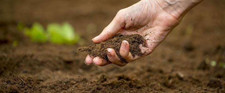 Propuestas para el rescate de los suelos